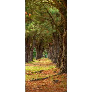 WALLPAPER - Tree lined lane