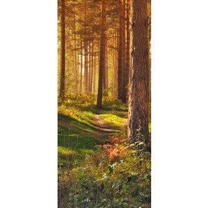 WALLPAPER - Forest