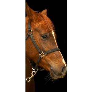 WALLPAPER - Horse