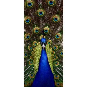WALLPAPER - Peacock