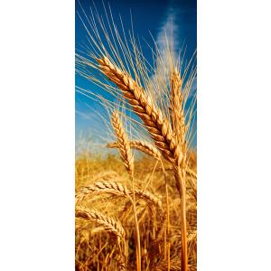 WALLPAPER - Wheat field